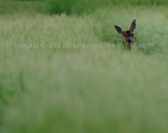 Watcher in the field