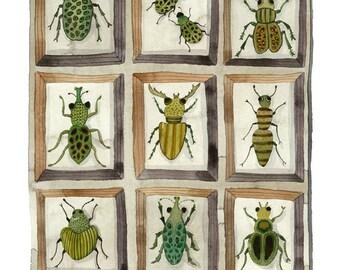 Käfer und Rüsselkäfer drucken, Entomologie Exemplare Sammlung, Giclée Kunstdruck, Aquarell Reproduktion