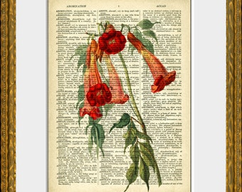 CRIMSON FLOWER  recycled book page art print - an upcycled antique dictionary page with a retooled antique flower illustration - wall art