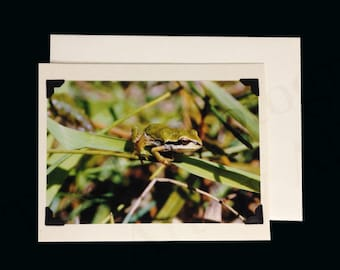 TREE FROG PHOTO, greeting card, photo card, blank cards, handmade card, special occasion card, nature photography, wedding, wall art, frog