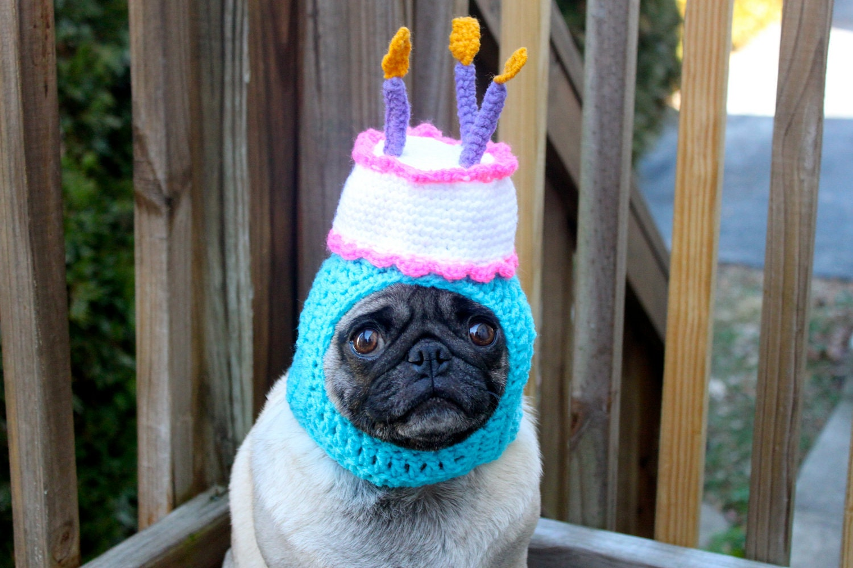 Happy Happy Birthday Cake Dog Hat / Made To Order