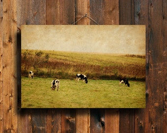 "Autumn Cows - 16x24"" Canvas print - Cows photography - Country photography  - Cow art - Cow decor - Country decor - Autumn decor"