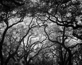 Black and White Tree Photography of Trees and Sky