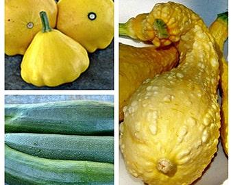 Heirloom Summer Squash  Collection Non-GMO Naturally Grown Open Pollinated Gardening