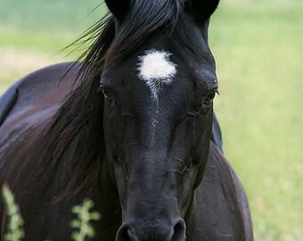 Black Horse Photography, Western Decor, Quarter Horse Photo, Horse Lover Gift, Fine Art Print