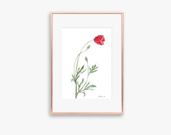 Poppy Flower Poppy Watercolor ORIGINAL Painting  Botanical Illustration Watercolor Painting Poppy Wall Art Red Poppy Flower Illustrstion