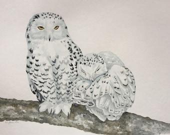 Snowy Owls - Original Watercolor - 15x22