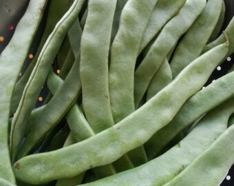 Helda Romano Pole Beans 12+  Seeds ~ rare