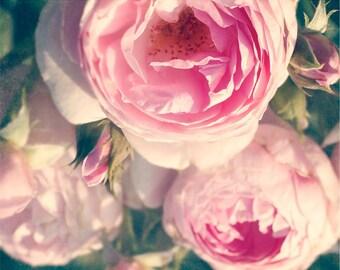 Shabby Chic Flower Photography, Ranunculus roses, pink decor, botanical print, romantic, dreamy, pastel, floral decor, nursery decor, fPOE