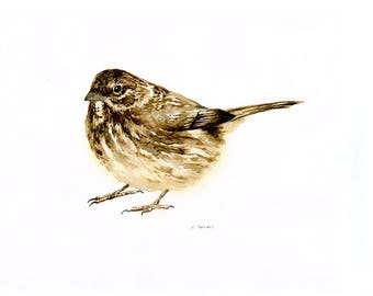 8 x 10 Original Watercolor Painting of an American Sparrow