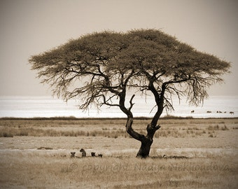 Savannah Tree with Lions - SEPIA photo print 8x10 inches (20x25cm) - African safari fine art nature landscape photography