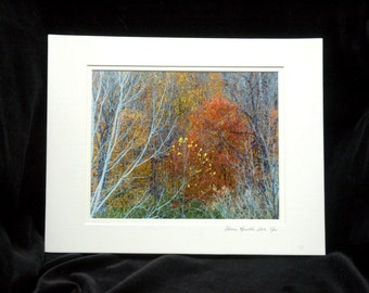 Autumn In The Woods Limited Edition 8x10 Print By Thomas Minutolo