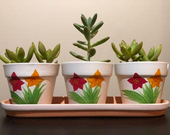 Unique planter with Succulents