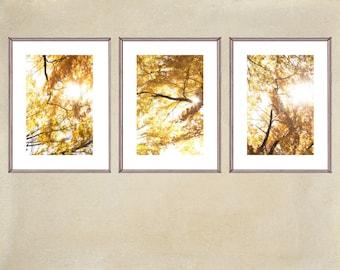 Autumn Tree Prints, Abstract Photography, Three Print Set, Gold Yellow Decor, Tree Wall Art Tryptic