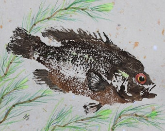 ORIGINAL Rock Bass GYOTAKU ( Fish Rubbing ) on Grey Handmade Paper 8 X 10 Lake Art Fishing Fisherman Decor by Barry Singer