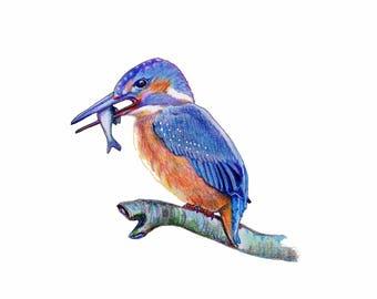 Kingfisher Print, Ready to Ship, A4 Digital Print, Bird Art, Blank Greeting Card, Kingfisher, Bird lover gift, Bird Drawing, Pencil Art