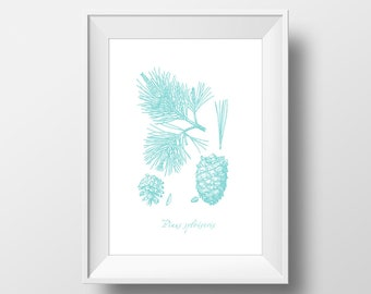 Wall Art Pinecone Graphic Blue Botanical Print,Minimalistic,Poster,Printable,Living Room Decor,Vintage Botanical,Kitchen Print,Wood,Forest