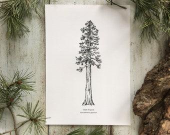 Sequoia - Print A4