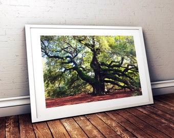 Fine Art Photography, Angel Oak Photograph, Oak Tree Art, Charleston SC, Southern Oak, Historic Landmark, Live Oak, FREE SHIPPING