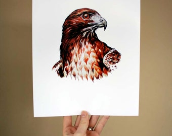 Red Tailed Hawk portrait - Archival quality print