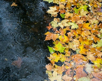 Autumn Leaves Photography - London Print - Bishops Park, Fulham - Fall - Leaves on Water