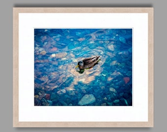 THE CONTENTED DUCK -  - Framed Art Photography, Home Decor, Wall Art