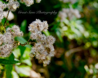 Puffs on a Branch, Photography, Home Decor