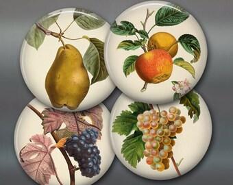 set of botanical fruit prints fridge magnets - vintage botanical prints for kitchen - set of magnets