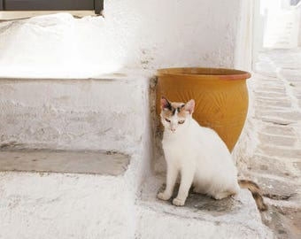 """Cat Photography  - white gold wall art - Greece photography - cat wall art print   """"Cat and Gold Pot"""""""