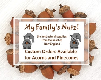 Acorns Real Acorns Natural Acorns Large Small Tiny Jumbo Acorn Nuts Pinecones Real Pinecones  Custom Order NOT FOR PURCHASE My Familys Nutz