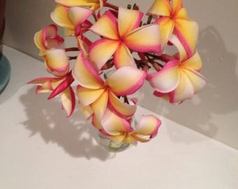 RAINBOW Plumeria CUTTINGS and ROOTED, Includes Growing Guidelines & Bloom Fertilizer, Beautiful Colorful Frangipani
