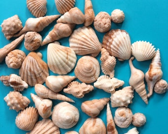Sea Shell fondant topper 50pcs Beach cake topper beach cupcake toppers sea shore edible sea shells party favors  summer decorations