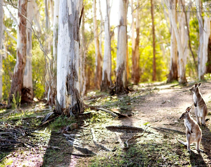 Featured listing image: Kangaroo Magic - Matted & Unmatted Prints. Various sizes