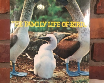 70s The Family of Birds Hardcover Book FREE SHIPPING