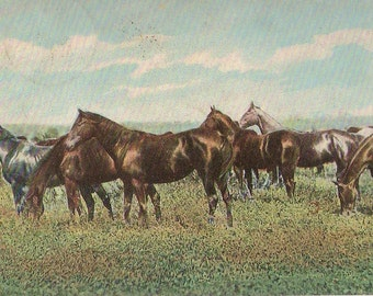tarjeta postal: A herd of horses grazing in a rich grass meadow tended by one man.