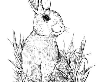 Sitting Rabbit - Art Print