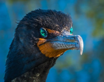 Blue Eyes, Bird, Nature, Wild Life, Here's Looking At You, Outdoors
