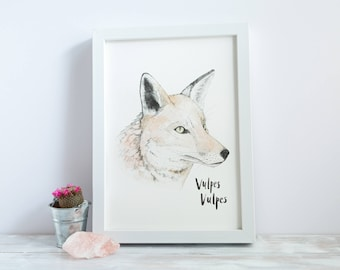 Fox | A4 Giclée Print