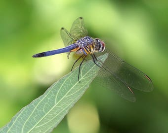 Dragonfly on the edge, dragonfly, nature, insect, art, photography,