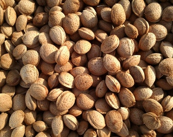 Almonds photo Wall decor Home decor Kitchen decor Instant download