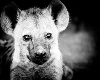 Hyena Cub Fine Art Photography - Wildlife Art - Modern Wall Art - Black and White Photo - Monochrome Wild Animal - Baby Animal Room Decor