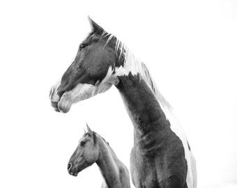 Horse Art Decor // Canvas Photography Print // Horse Photo // Baby Gift // Wall Art // Animal Print // Black and White // Mid Century Modern
