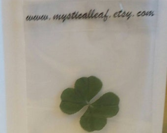 Lucky Four Leaf clover regift card included.  Free Shipping, #4leafclover, #fourleafclover