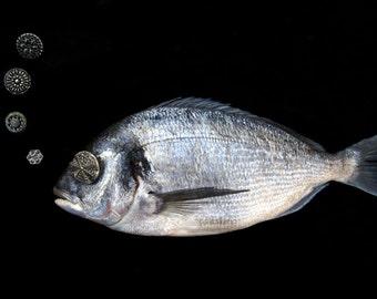 Stilleben-Photographie - Fisch und Blasen-Print