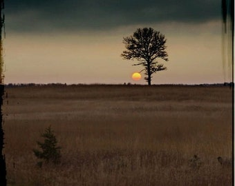 25% Memorial Day Sale Sunset photograph, tree print, home decor,  Fine Art Photograph