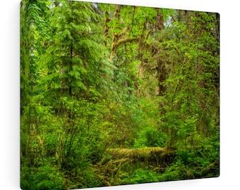 Hoh Rainforest No. 1 Canvas Gallery Wraps