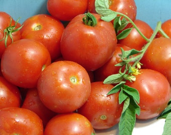 Early Stupice Tomato Heirloom Garden Seed Non-GMO 30+ Seeds Extremely Early Cold-tolerant Open Pollinated Gardening