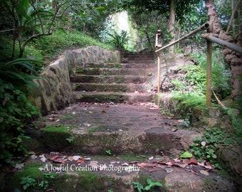 Oahu - Hawaii - photograph - Hawaii photo - Waimea Valley - Steps at Waimea Valley - Garden Steps - Oahu Steps Photograph - North Shore
