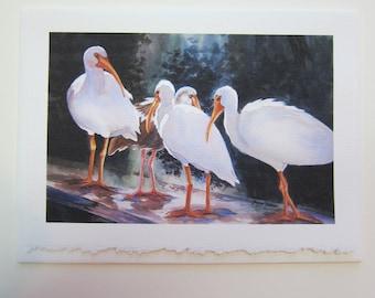 White Ibis, 5 x 7 note card watercolor print  Florida shorebirds birdlife wildlife art paper birds