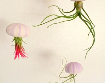 Air Plant Hanging Set of Three in Lavender Purple Urchins Comes Assembled and ready to hang